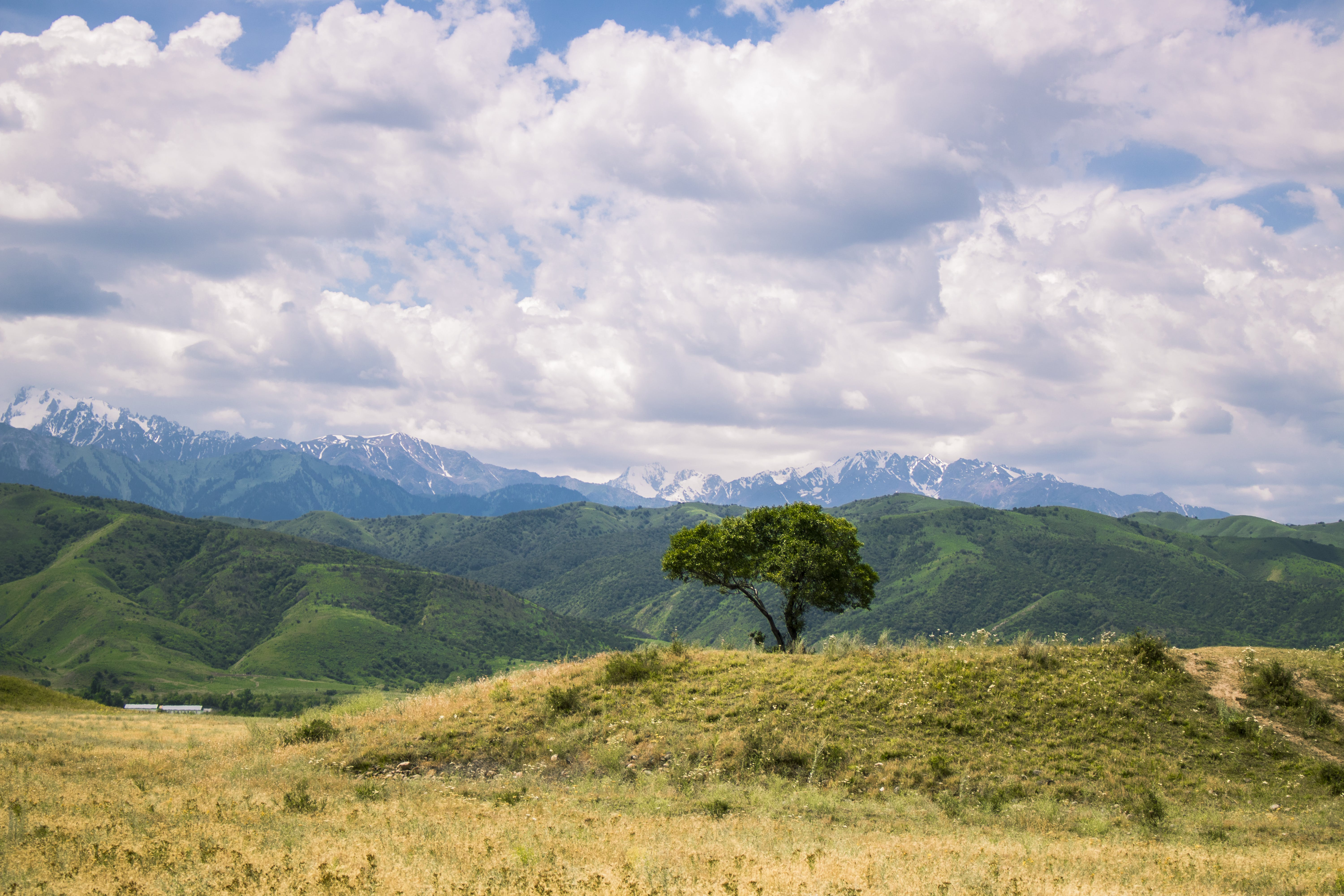 Landscape Photograph of Tree on Mountain Ranges