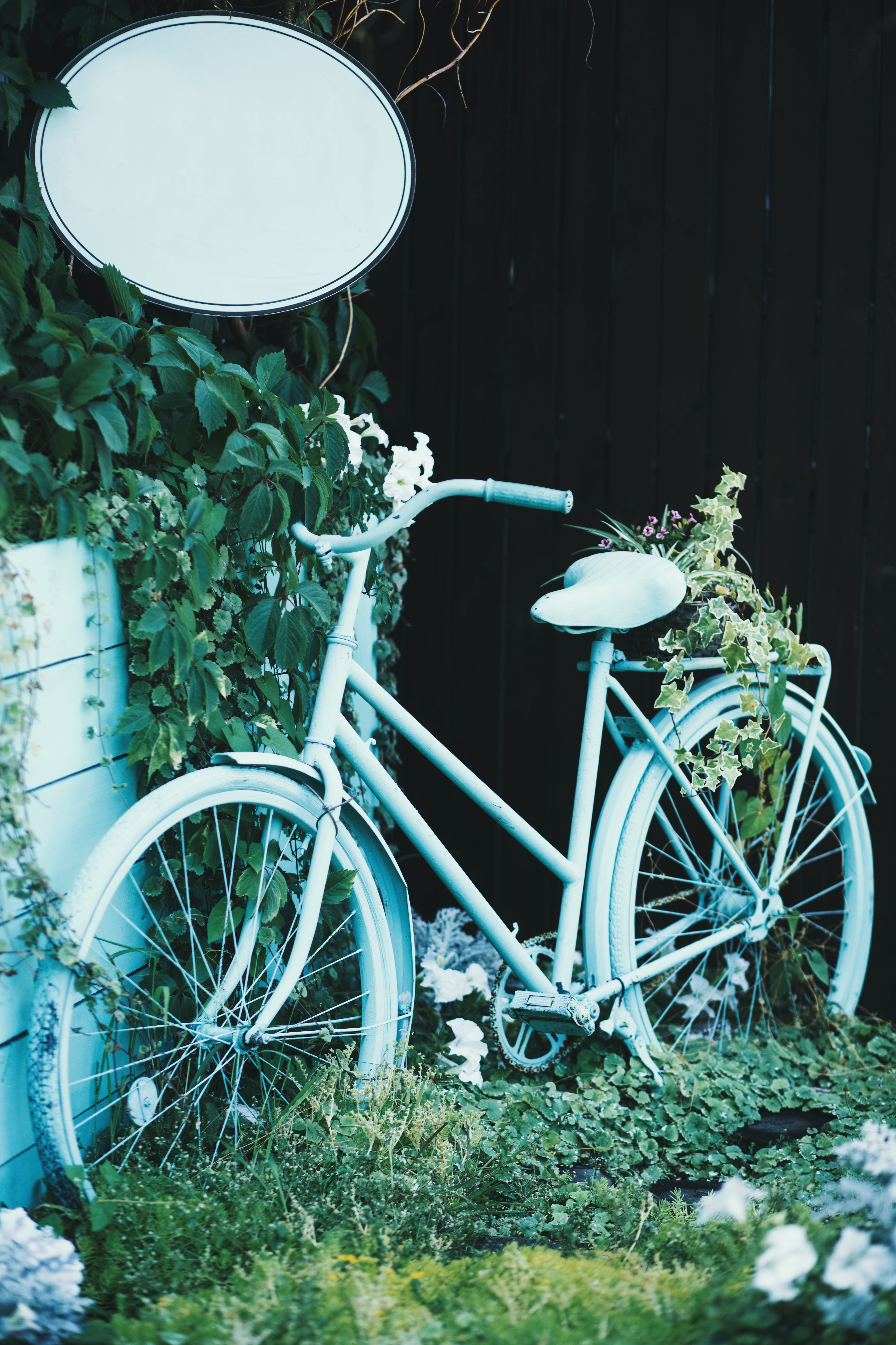 Ảnh lưu trữ miễn phí về cỏ, hệ thống giao thông, hệ thực vật, hoa