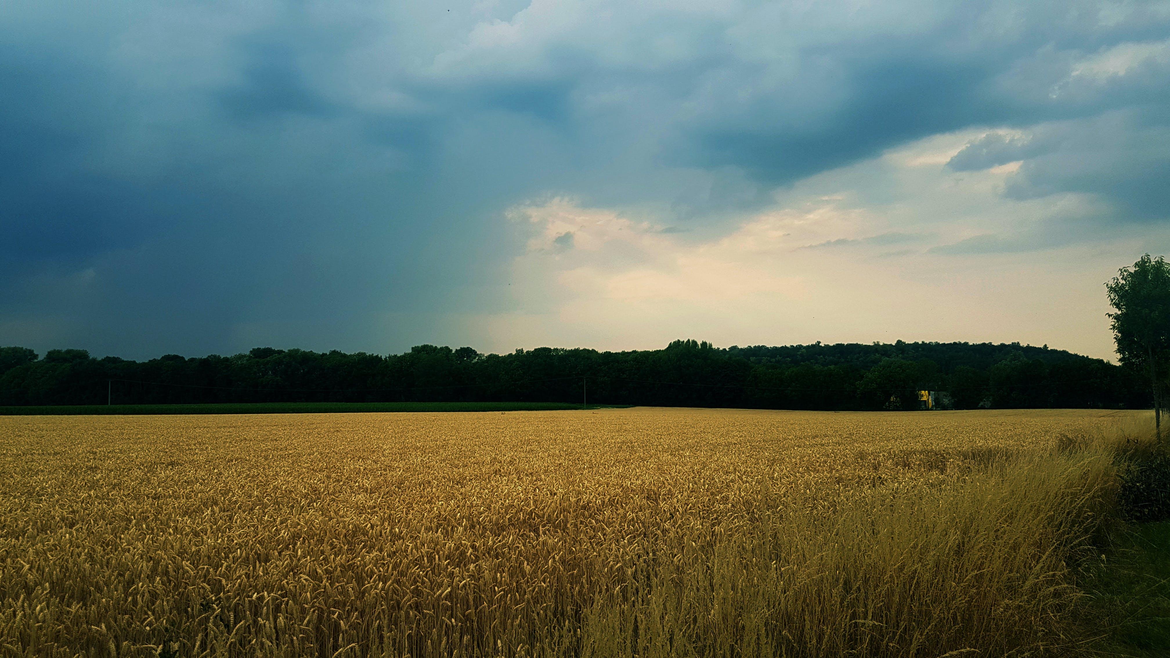 Free stock photo of hobby, landscape, mothernature, nature