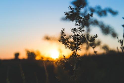 Gratis stockfoto met achtergrondlicht, avond, bomen, dageraad