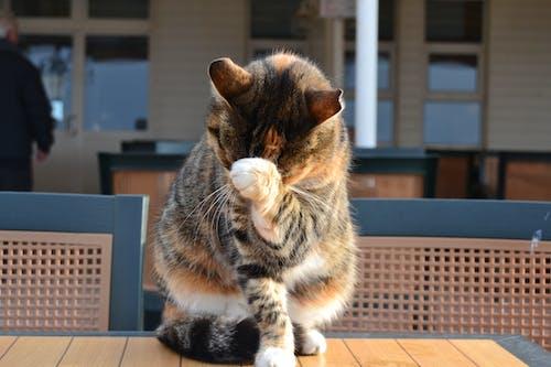 Δωρεάν στοκ φωτογραφιών με kedi, Γάτα, ζώο, Κωνσταντινούπολη
