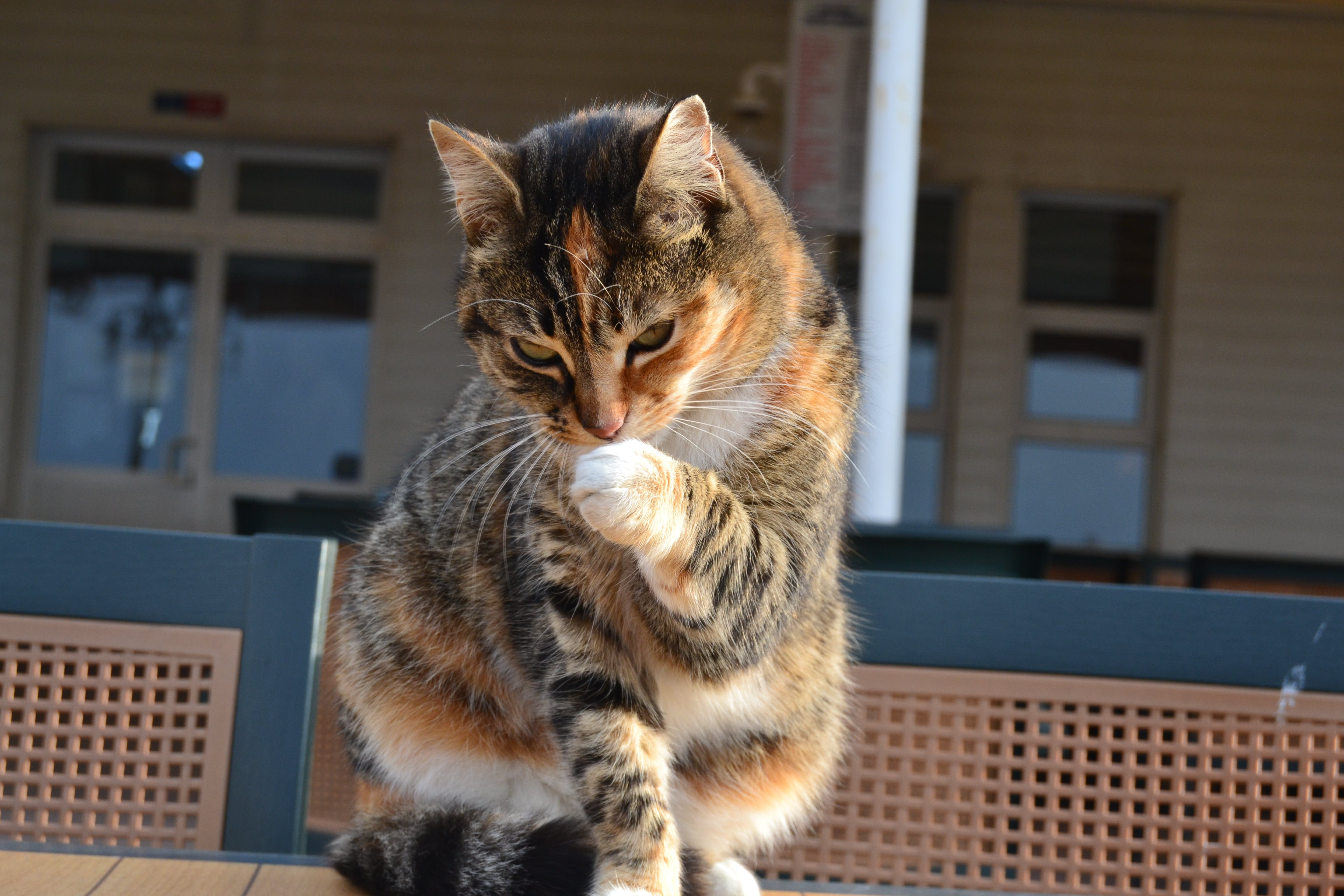 Free stock photo of cat, Istanbul, kedi, turkey