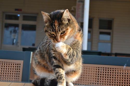 Δωρεάν στοκ φωτογραφιών με kedi, γαλοπούλα, Γάτα, Κωνσταντινούπολη