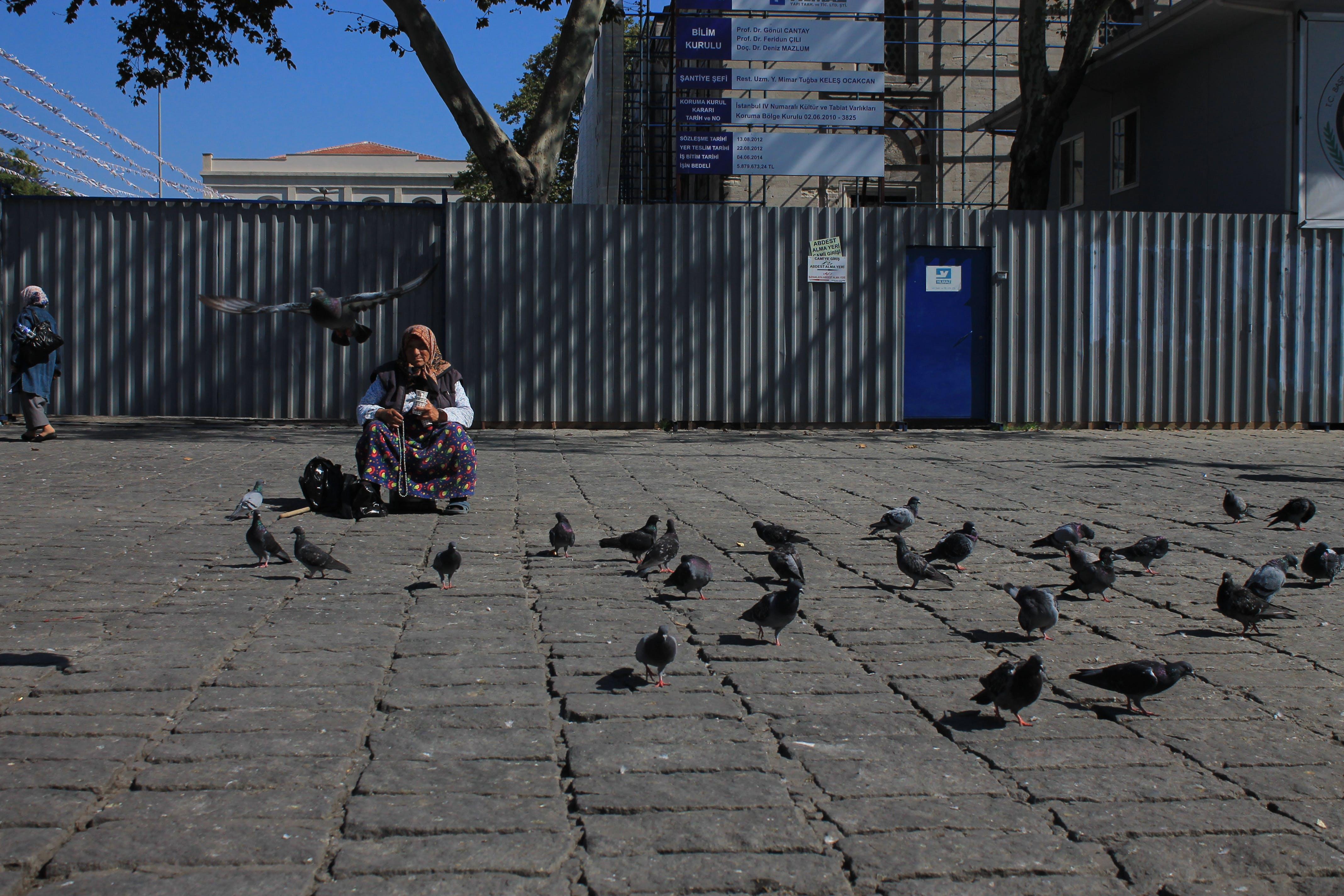 Free stock photo of Aksaray, güvercin, pigeon
