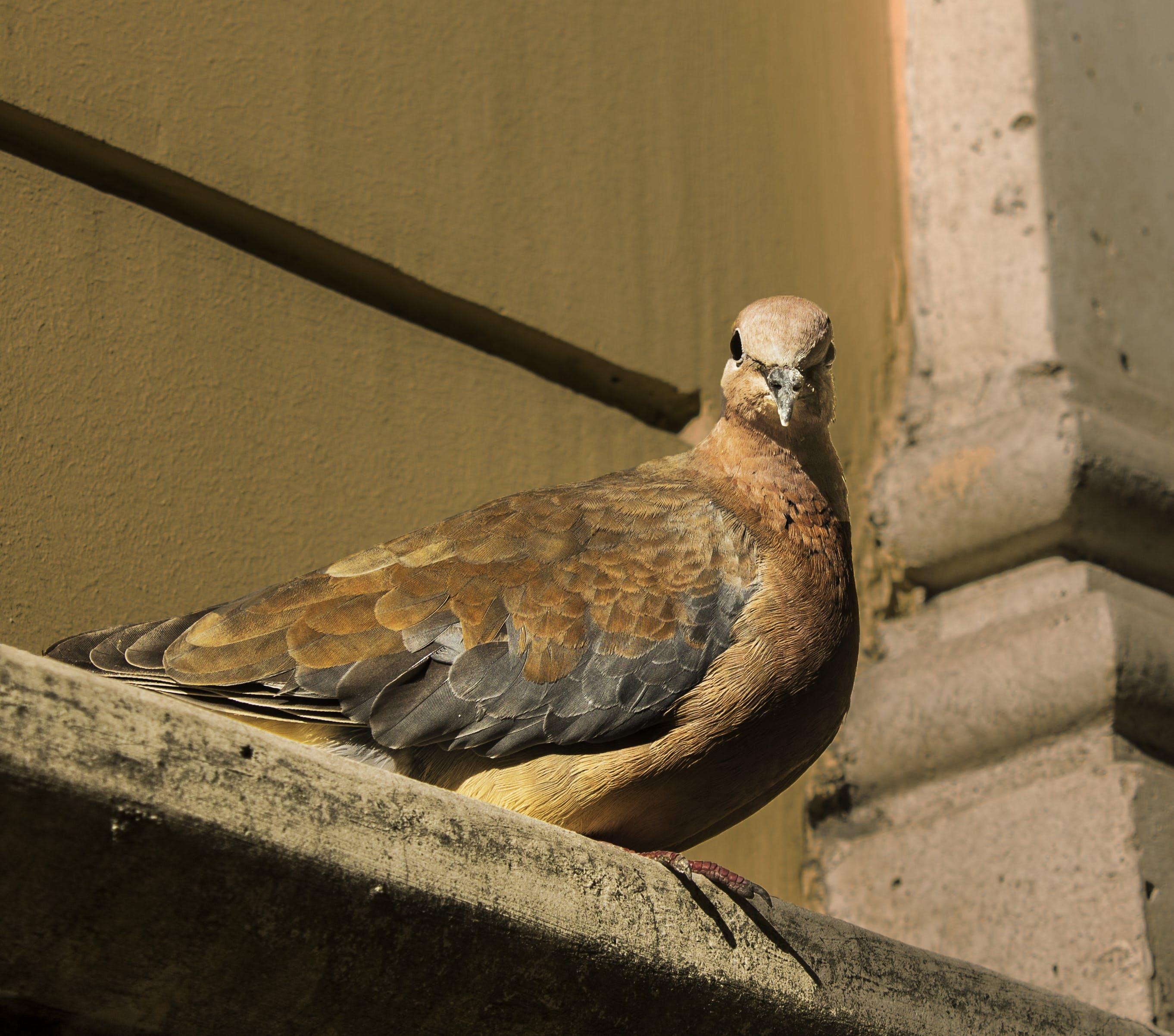Free stock photo of animal, beyoglu, bird, galata