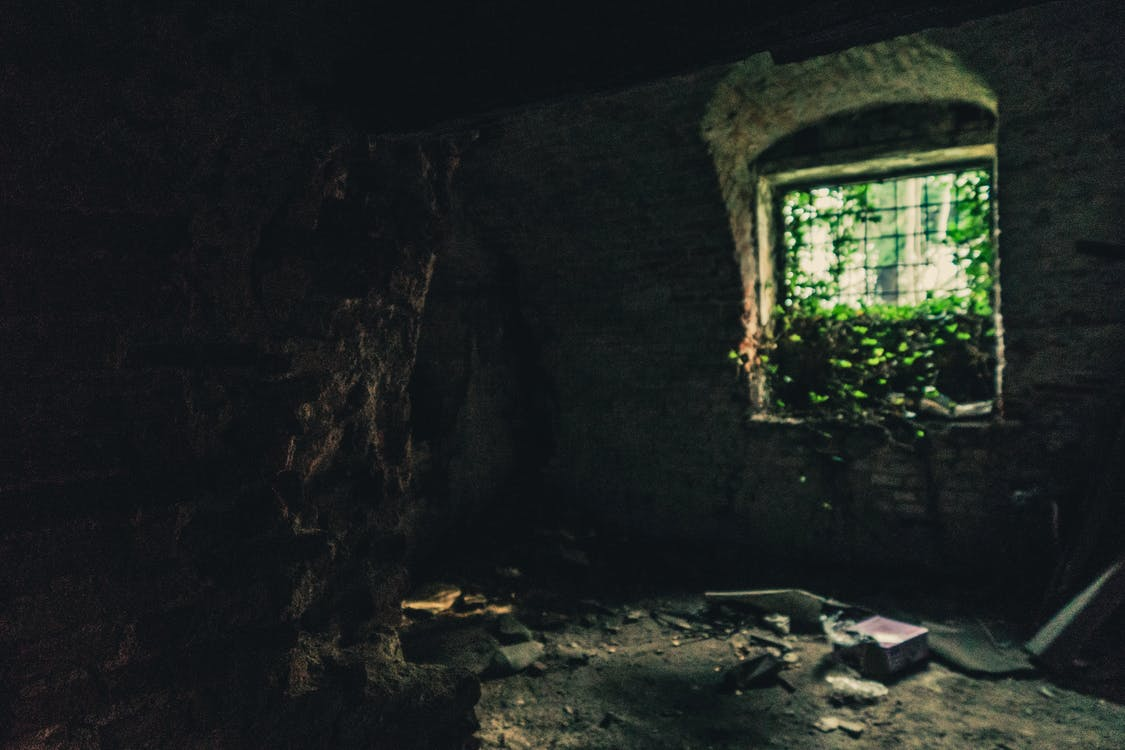 Dark Room With Green Plants on the Window