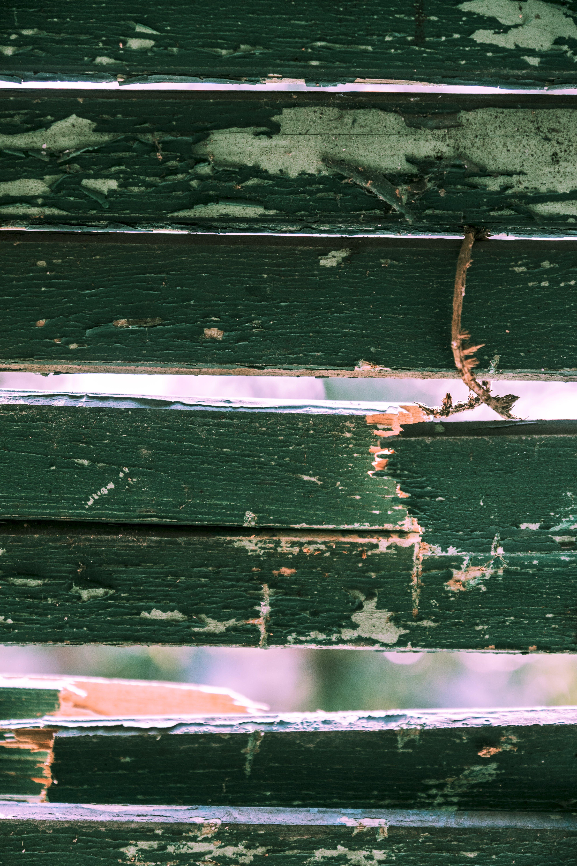 Gratis lagerfoto af close-up, grøn, itu, palle