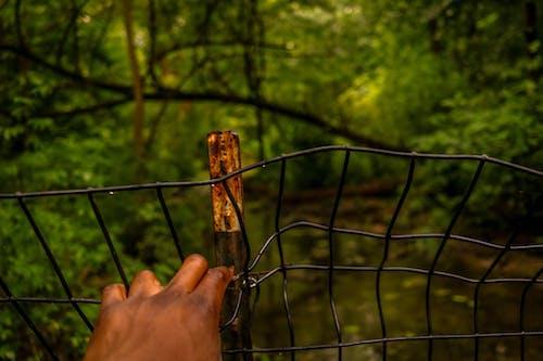 光, 公園, 劍道, 围栏 的 免费素材照片