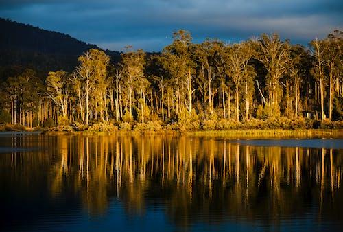 Gratis arkivbilde med gumtrees, gyllen, lake repluse, refleksjon