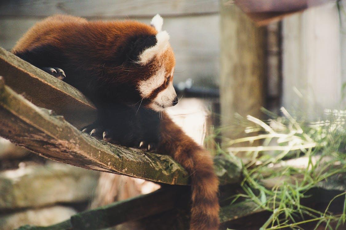 вымирающие виды, дерево, дикая природа