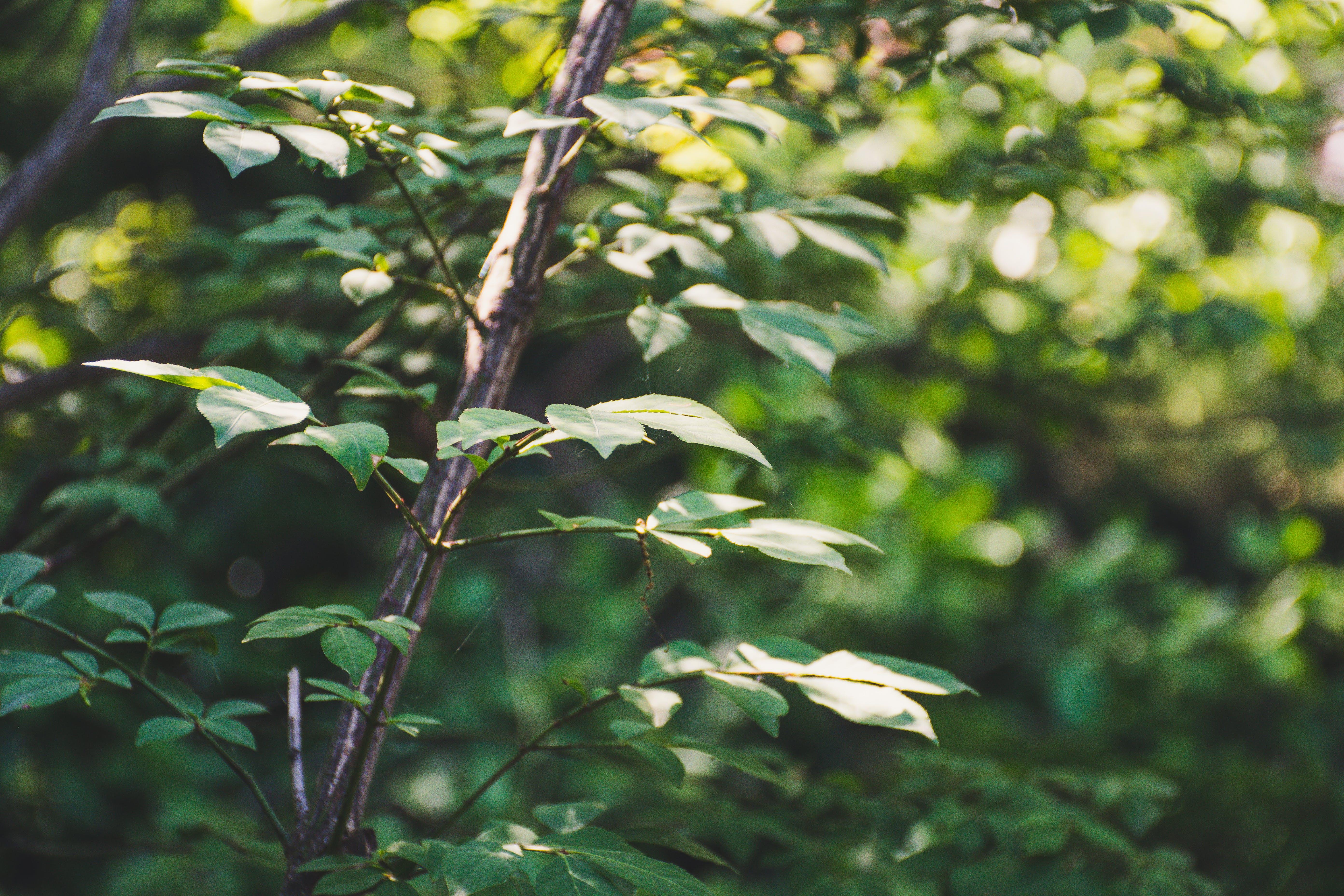 Photos gratuites de arbre, bokeh tourbillon, branche, brillant