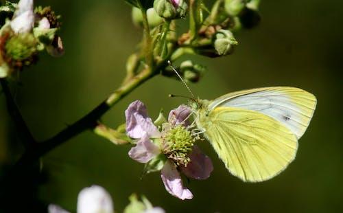 Бесплатное стоковое фото с #butterfly #yellow #flower #nature
