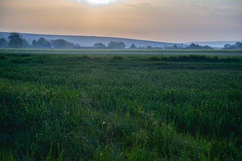 Fotobanka sbezplatnými fotkami na tému hracie polia, ranné slnko, ranné svetlo, východ slnka