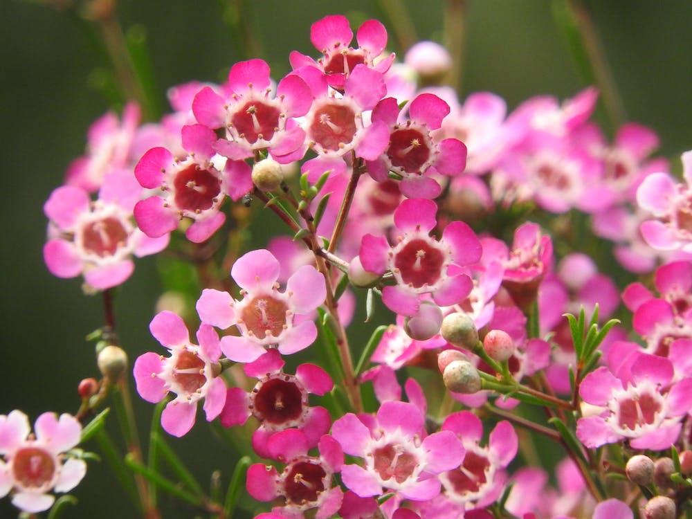 a l'aire lliure, bonic, botànic