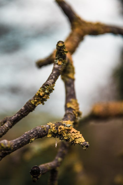 Galho De árvore Marrom
