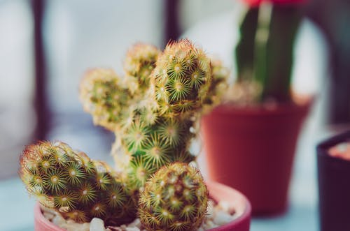 Foto stok gratis berduri, kaktus, kilang, makro