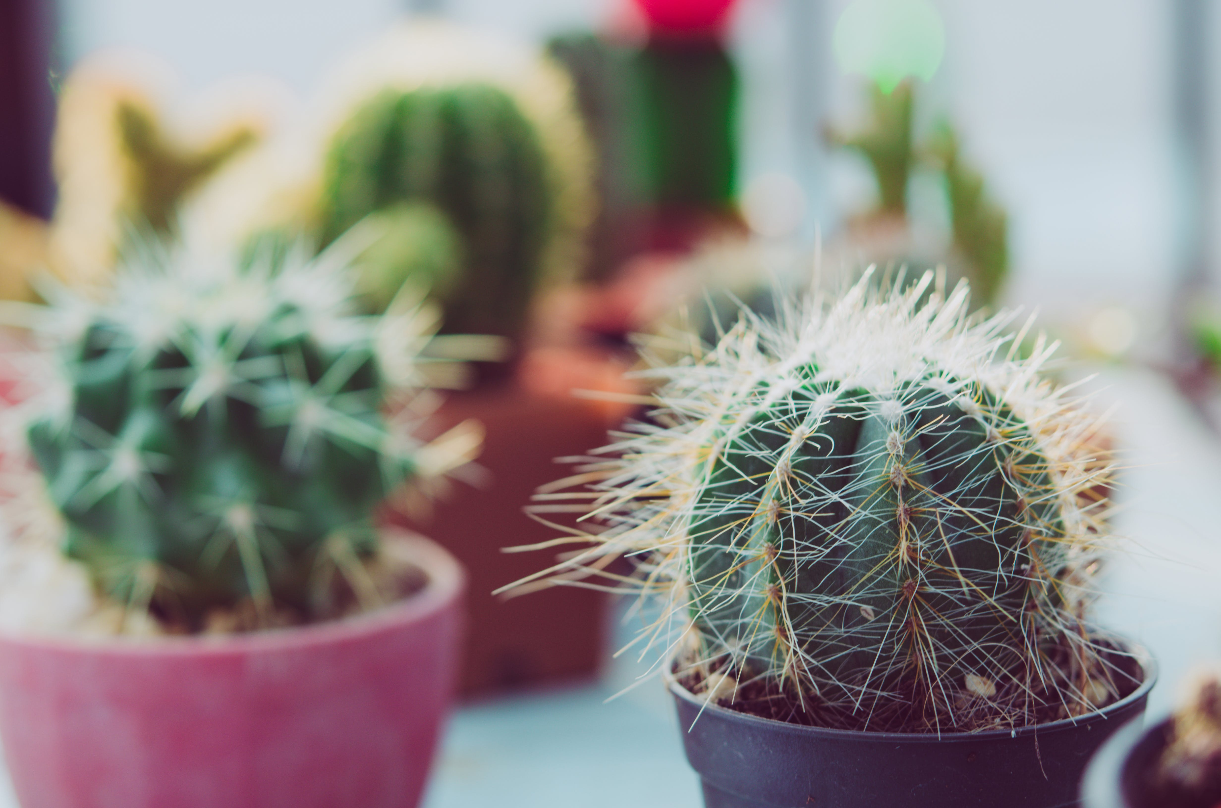 Shallow Focus Photography Of Potted Cactus