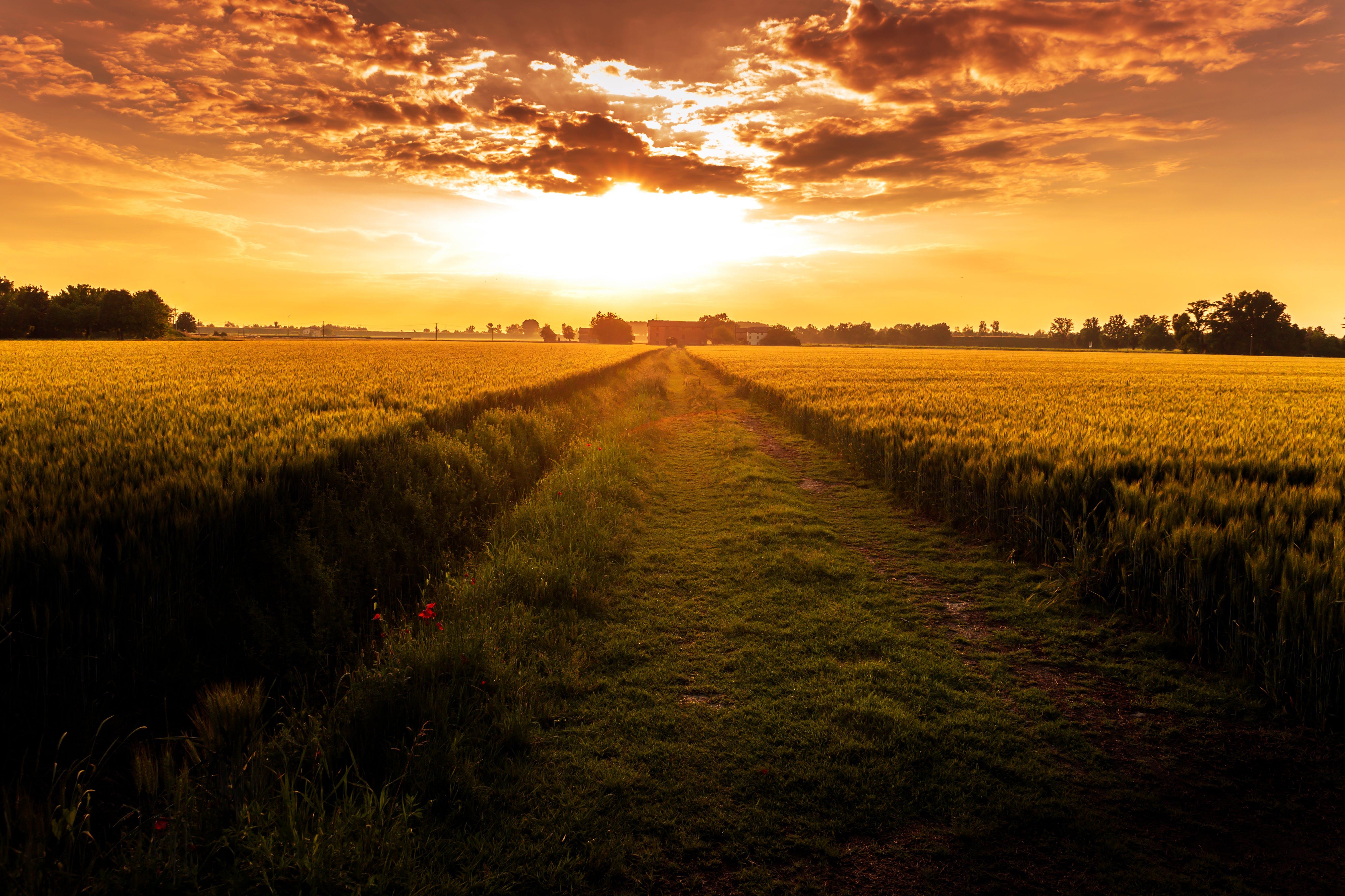 Grass Field Pathway