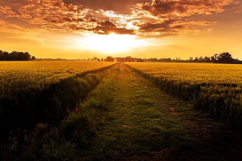 Безкоштовне стокове фото на тему «вечір, Захід сонця, зелений, зростання»