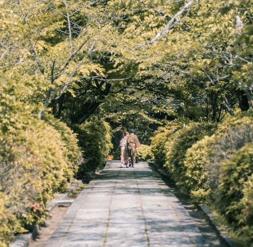 Fotos de stock gratuitas de higashiyama, kyoto, pareja asiática
