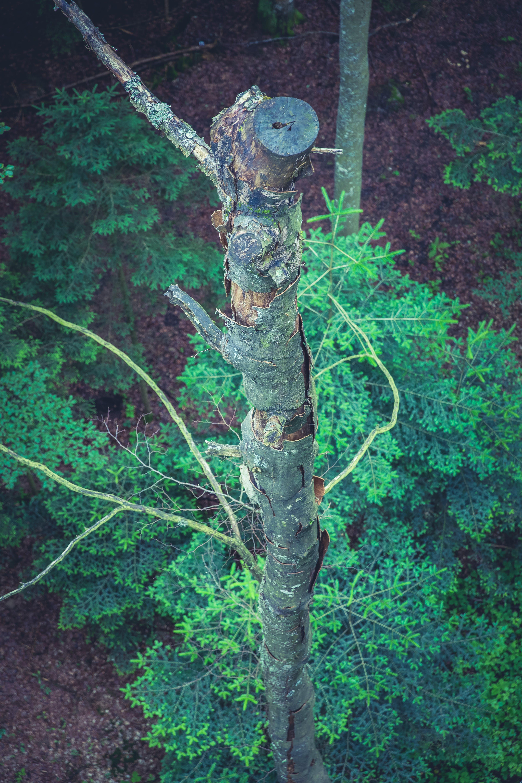 Kostenloses Stock Foto zu äste, baum, natur, vogelperspektive