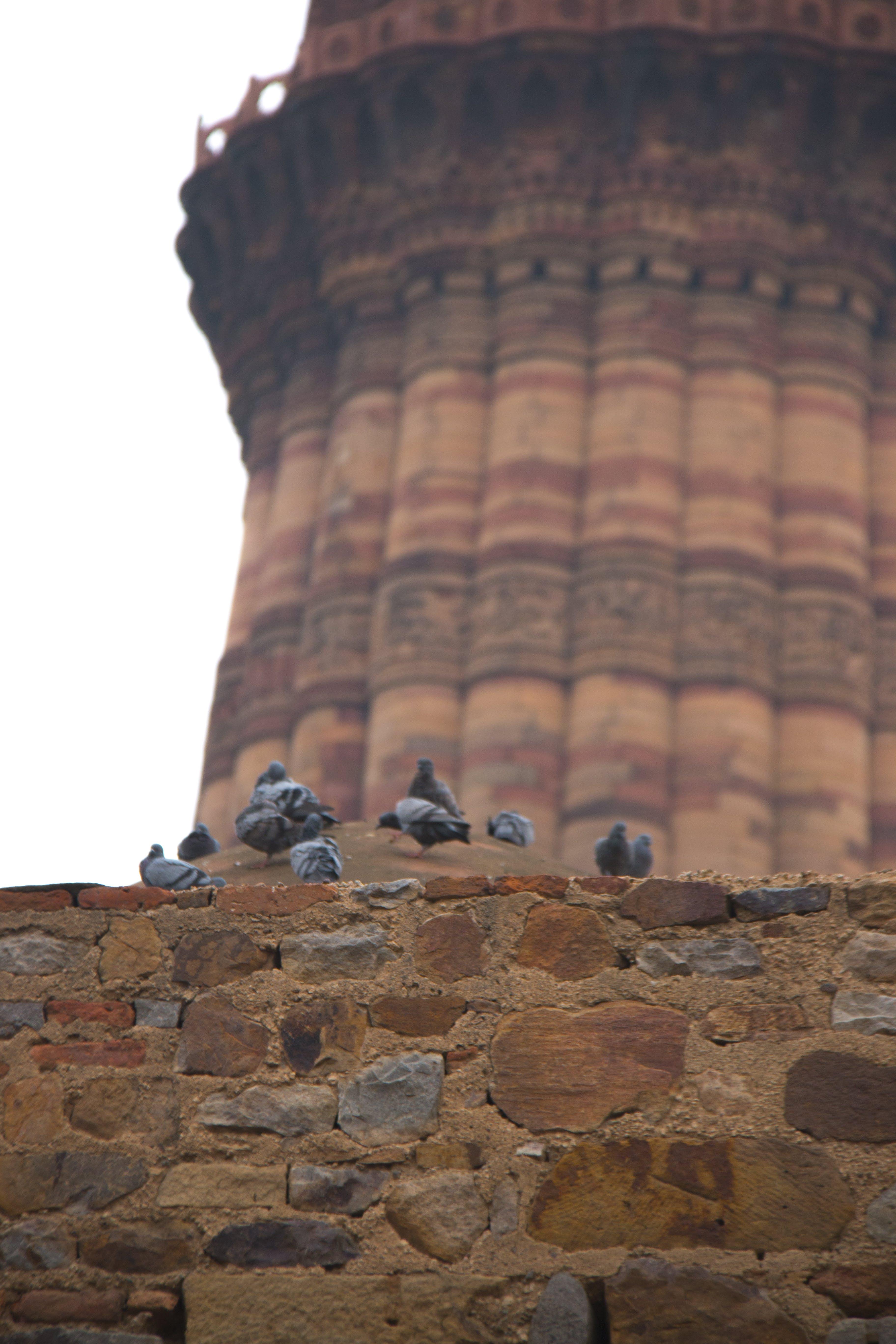 Free stock photo of qutub MInar delhi