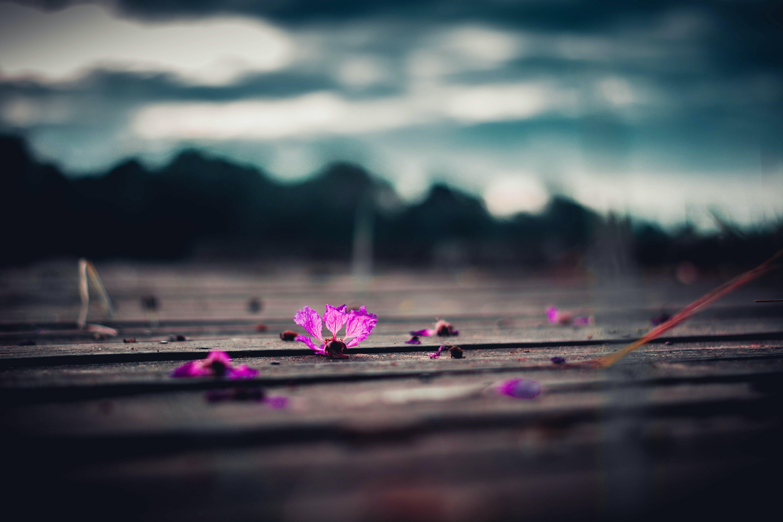 Purple Petaled Flowers On Brown Wooden Surface