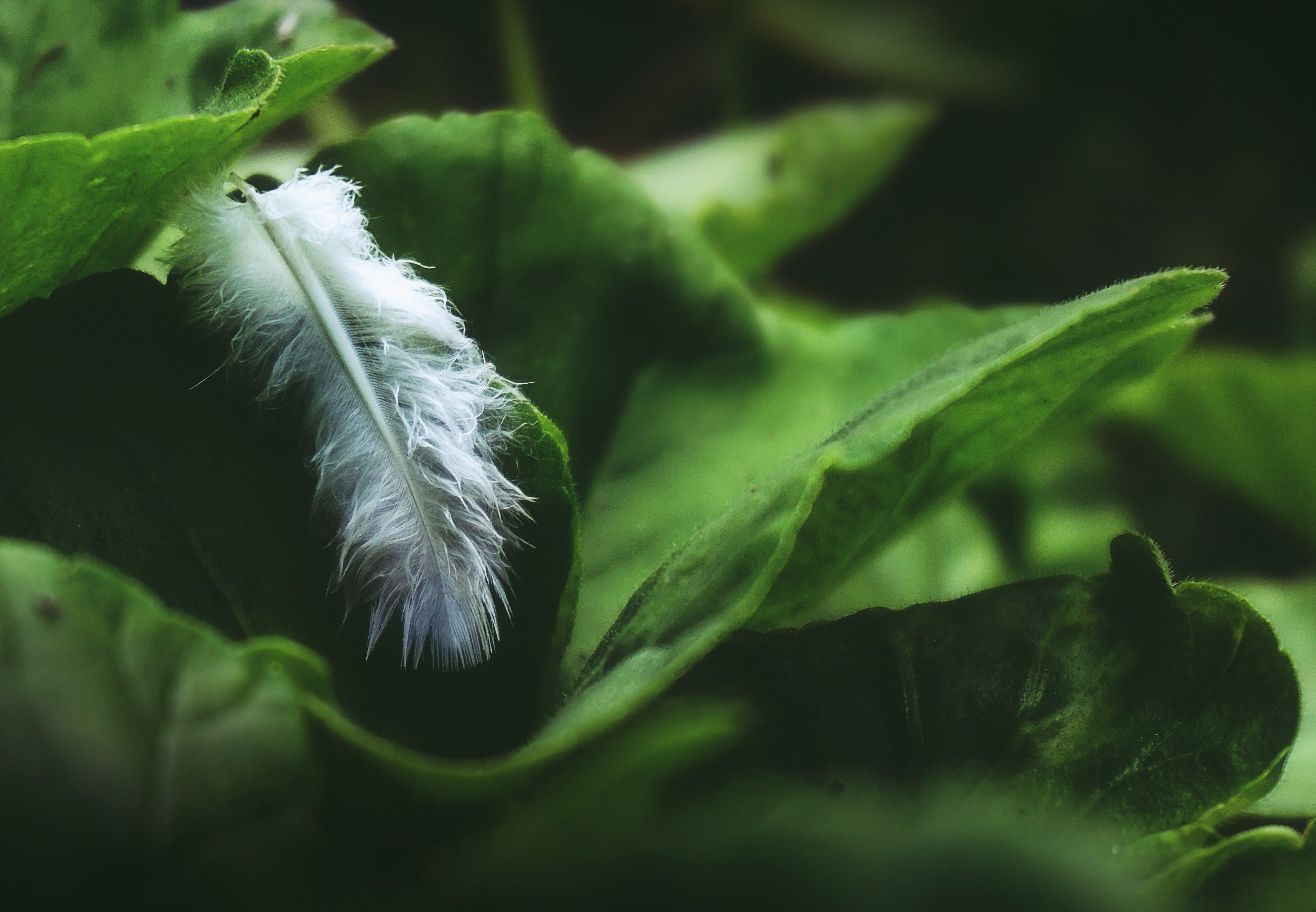 Closeup Photo of White Feather on Green Leaf