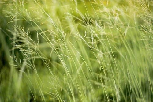 Foto stok gratis berbayang, bidang, hijau, lingkungan Hidup