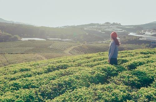 Fotobanka sbezplatnými fotkami na tému deň, denné svetlo, farma, hory