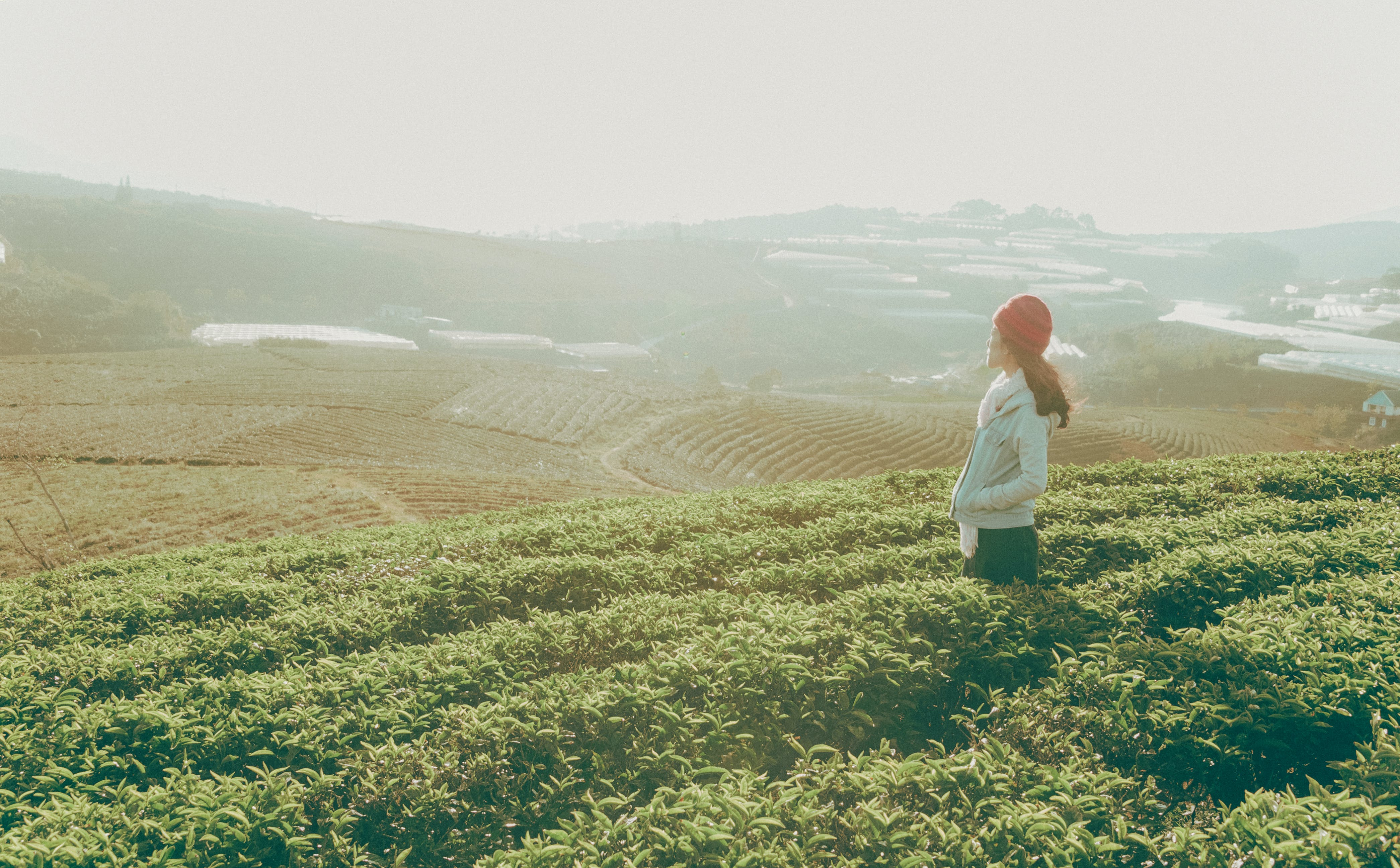 Woman Standing Looking over the Horizon Surrounded by Green Leaf Plantation Field