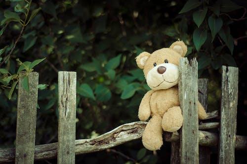 Fotos de stock gratuitas de animal de peluche, cerca, juguete, osito de peluche
