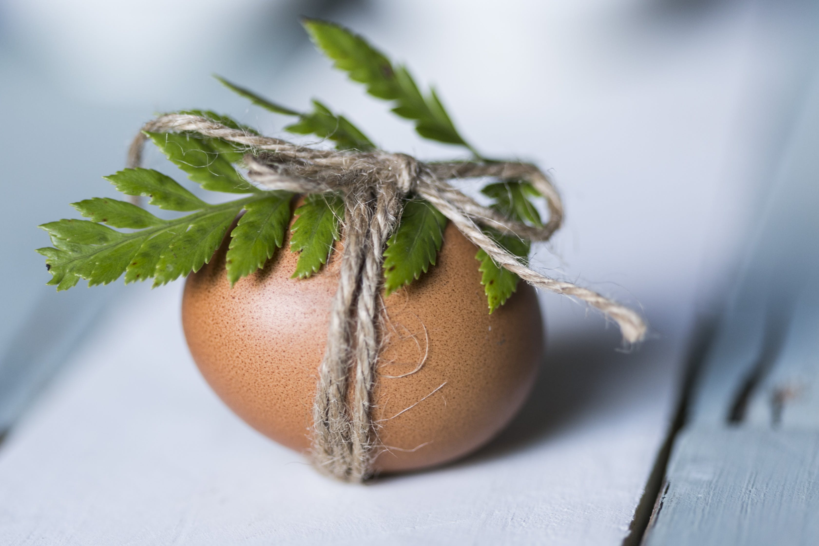 Brown Egg With Leaf