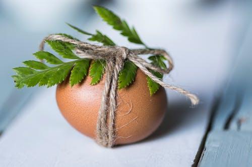 Ingyenes stockfotó húsvéti tojás, makró, tojás témában