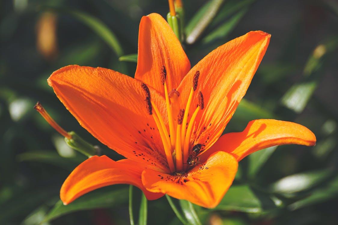 flora, kwiat, kwitnąć