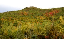 mountains, forest, trees
