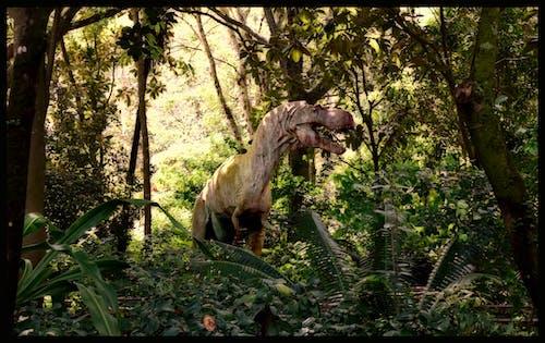 侏羅紀, 恐龍, 暴龍, 森林 的 免費圖庫相片