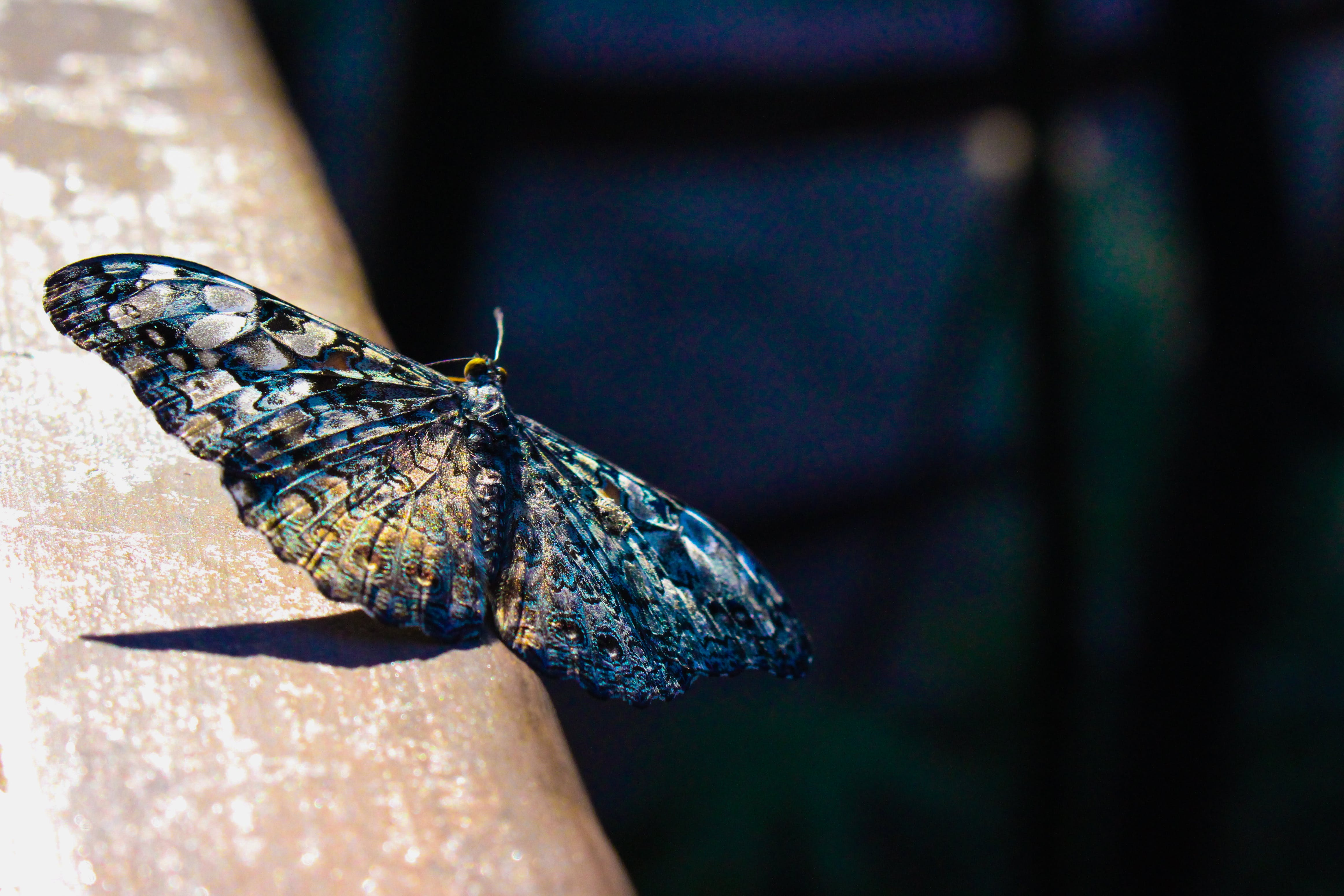 Selective Focus Photography of Gray and Blue Moth Perched on Brown Surface