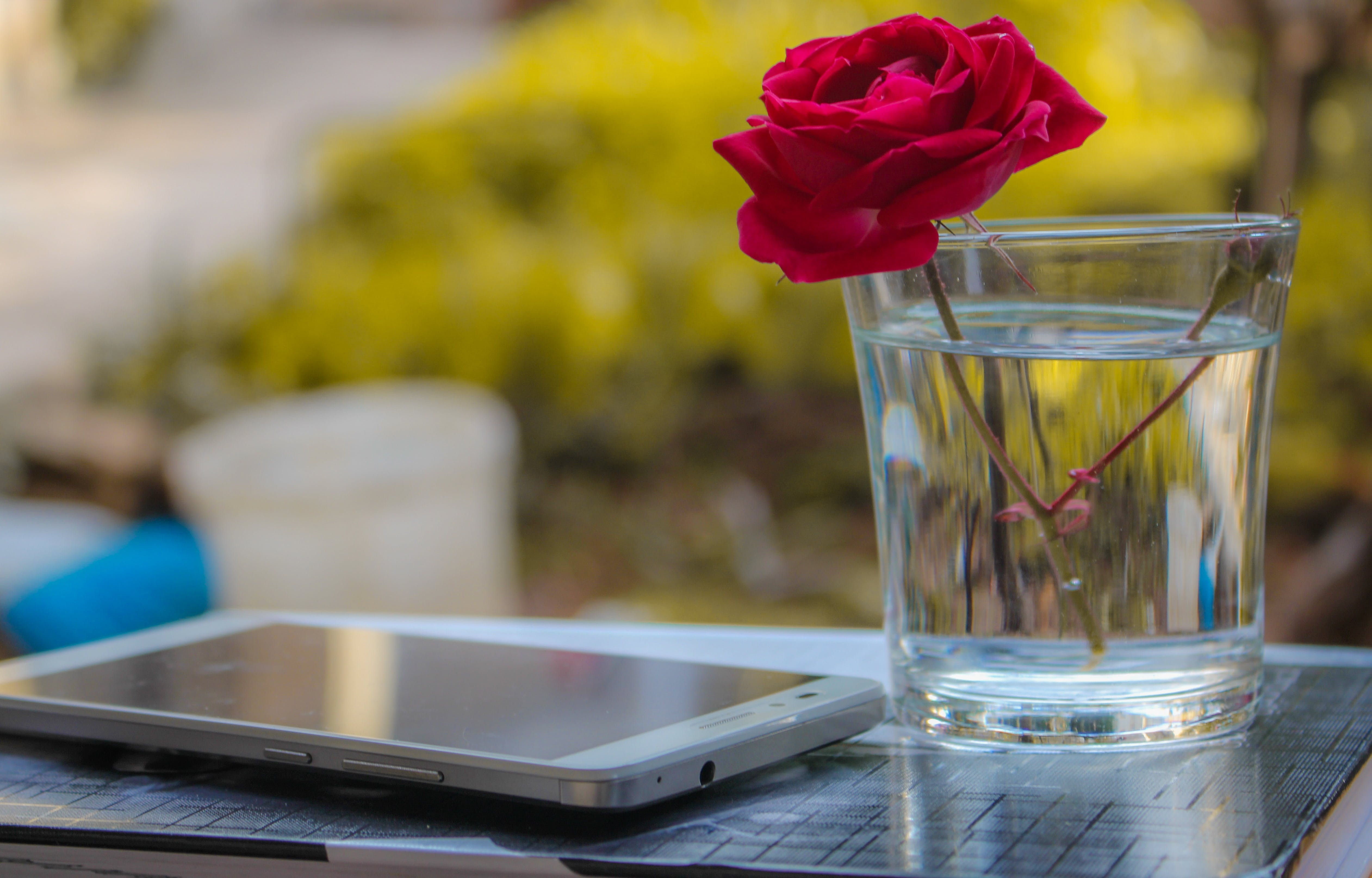 Red Rose In Clear Drinking Glass With Water Beside White Smartphone