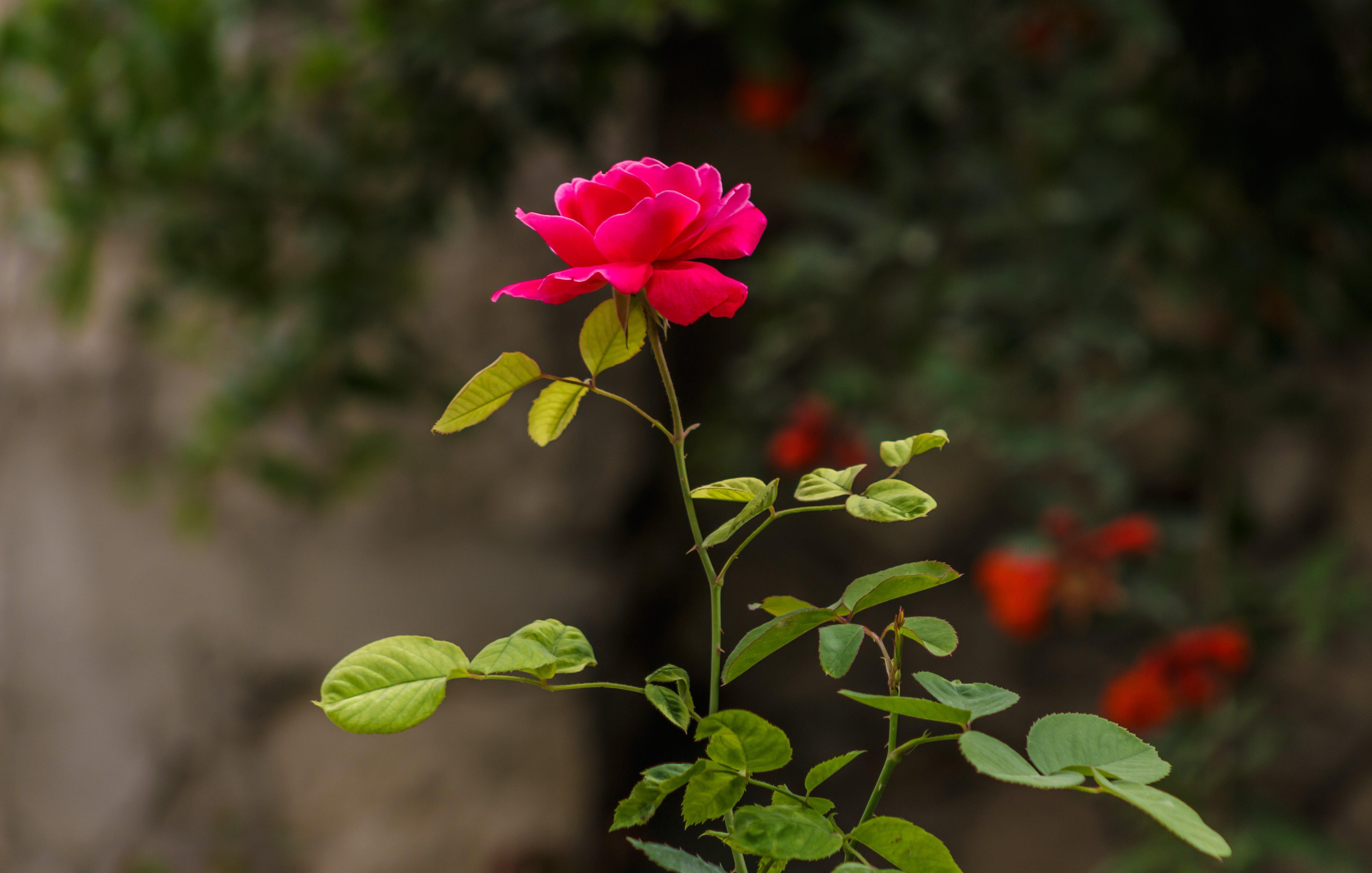 Bahçe, bitki, bitki örtüsü, çiçek içeren Ücretsiz stok fotoğraf