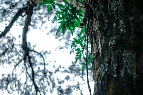 ağaç, ağaç gövdesi, ağaç kabuğu, ahşap içeren Ücretsiz stok fotoğraf