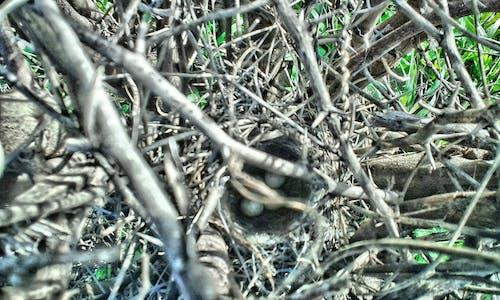 Imagine de stoc gratuită din #pasăre, mama natură, ou