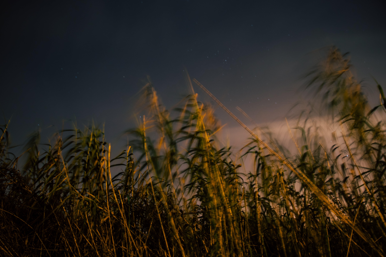 Kostnadsfri bild av beskära, bondgård, fält, gräs