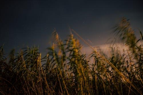 Základová fotografie zdarma na téma farma, hřiště, plodina, pole