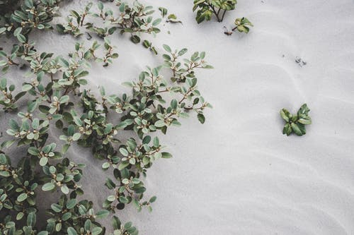 Photo of Plants On Sand