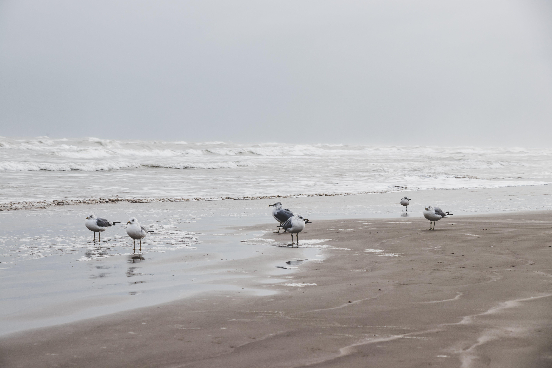 Ảnh lưu trữ miễn phí về bên bờ biển, biển, cát, chụp ảnh động vật