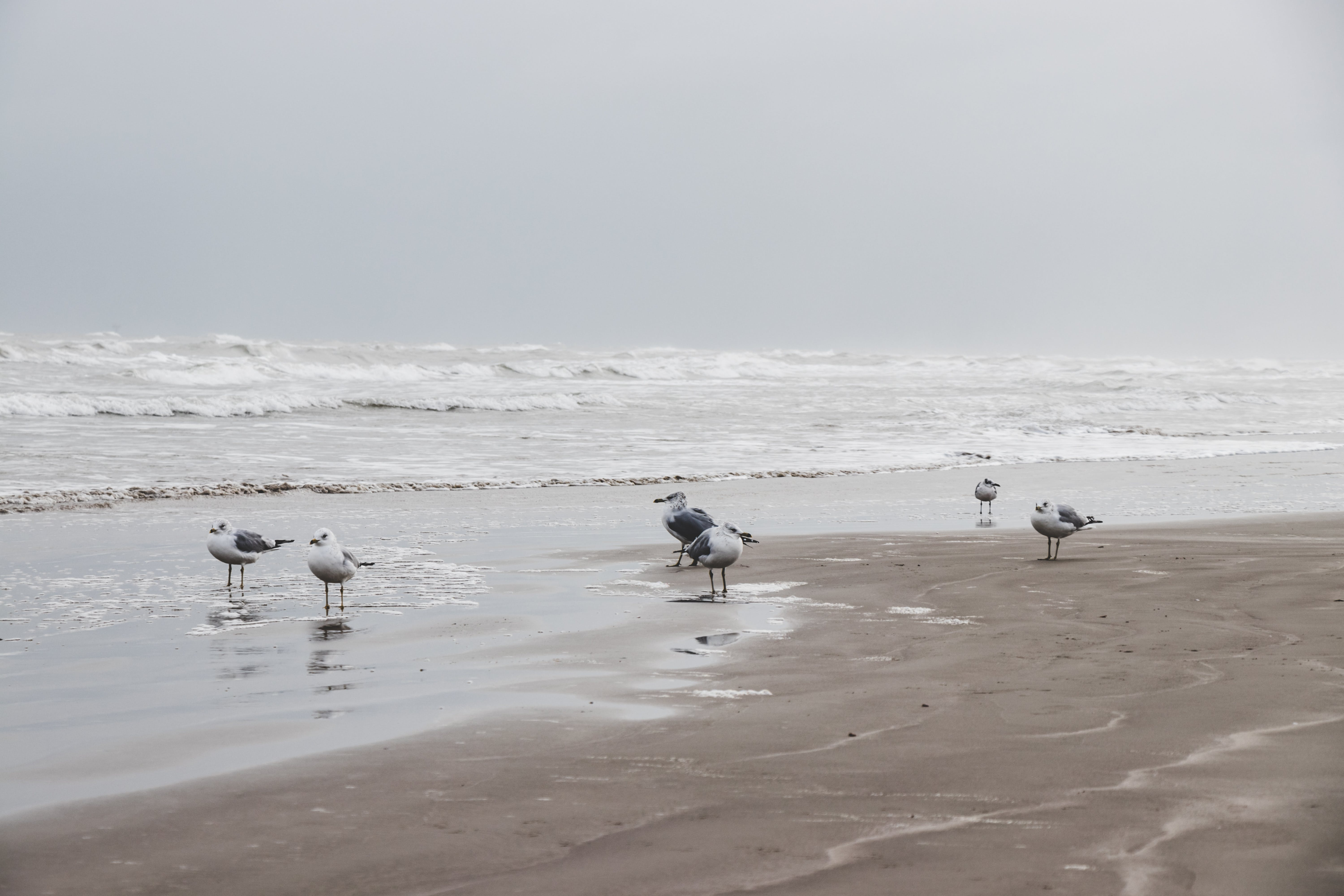 Photography of Seagulls on Seashore