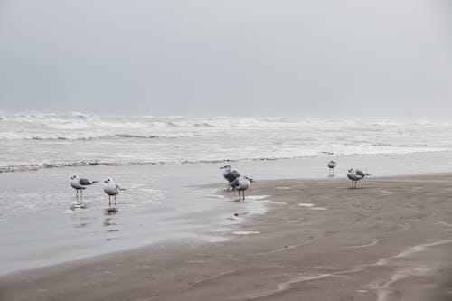 Photography of Seagulls on Seashore