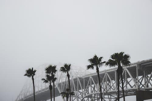 Ilmainen kuvapankkikuva tunnisteilla arkkitehtuuri, mustavalkoinen, puut, sumu