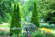 tree, green, wow